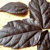 Cum se fac frunzele din ciocolata pentru tort?