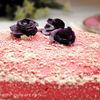 Tort pink cu arome de lime si scortisoara