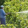 Sprijiniti micii producatori locali din Timis sau cum puteti cumpara fructe naturale!